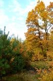 De herfstbos in Polen Stock Foto