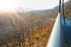 De herfstbos, Safari Park, het hoogste brug aan lopende mensen Stock Afbeelding