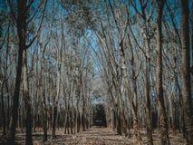 De herfstbos in Thailand stock fotografie