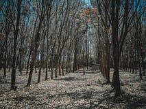 De herfstbos in Thailand stock afbeelding