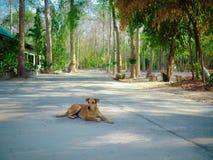 De herfstbos in Thailand royalty-vrije stock afbeelding