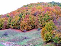 De herfstbos in Transsylvania, Roemenië Stock Foto