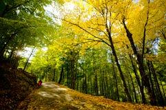 De herfstbos van het paradijs stock fotografie