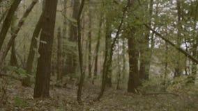 De herfstbos, video stock videobeelden