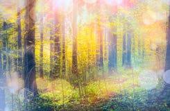 De herfstbos in zonlicht met bokeh Royalty-vrije Stock Afbeeldingen