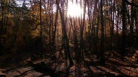 De herfstbos in zonnige dag stock afbeeldingen