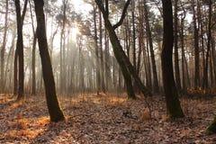 De herfstbos, zonstralen Stock Foto