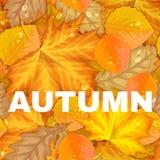 De herfstbrief met bladeren Royalty-vrije Stock Afbeeldingen
