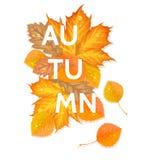 De herfstbrief met bladeren Stock Foto's