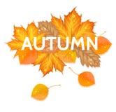 De herfstbrief met bladeren Stock Afbeeldingen