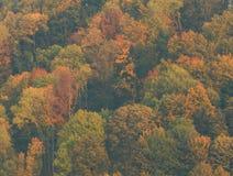 De herfstcamo Stock Foto's