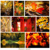 De herfstcollage Stock Foto