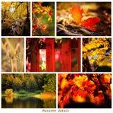 De herfstcollage Stock Foto