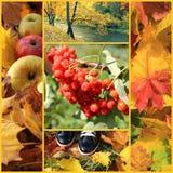De herfstcollage Stock Afbeelding