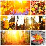 De herfstcollage Stock Afbeeldingen
