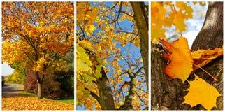De herfstcollage Stock Fotografie