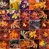 De herfstcollage Royalty-vrije Stock Foto