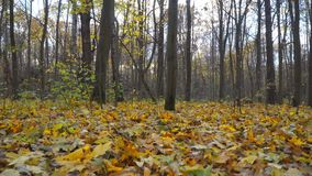 De herfstdag in stadspark stock footage