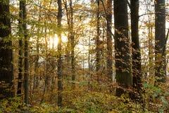 De herfstdageraad in het bos Royalty-vrije Stock Fotografie