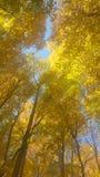 De herfstdak stock fotografie