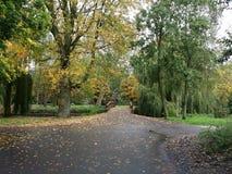 De herfstdaling landscap stock fotografie