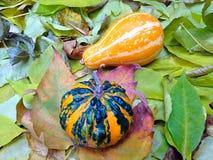 De herfstdecor Royalty-vrije Stock Afbeeldingen
