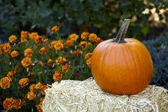 De herfstdecoratie stock afbeeldingen