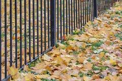 De herfstdiagonaal Stock Afbeeldingen