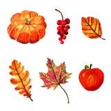 De herfstelementen - aardige hand geschilderde reeks, geïsoleerde beelden op witte achtergrond stock illustratie