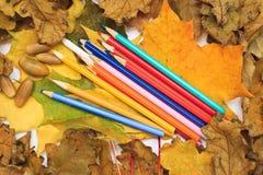 De herfstfoto Potloden, eikels en bladeren van esdoorn en eik Royalty-vrije Stock Foto