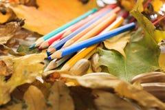 De herfstfoto Potloden, eikels en bladeren van esdoorn en eik Royalty-vrije Stock Afbeeldingen