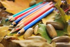 De herfstfoto Potloden, eikels en bladeren van esdoorn en eik Stock Fotografie