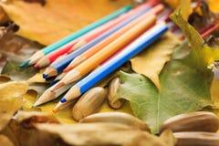 De herfstfoto Potloden, eikels en bladeren van esdoorn en eik Stock Afbeeldingen