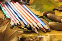 De herfstfoto Potloden, eikels en bladeren van esdoorn en eik Royalty-vrije Stock Afbeelding