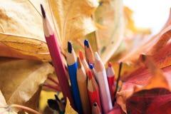 De herfstfoto Potloden, eikels en bladeren van esdoorn en eik Stock Foto