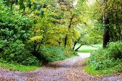 De herfstgang in park Royalty-vrije Stock Foto's