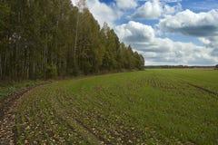 De herfstgebied bij de rand van het bos Stock Foto