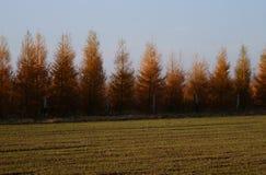 De herfstgebied dichtbij het bos Stock Afbeeldingen