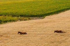 De herfstgebied met paarden en elektrische draden stock fotografie