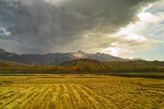 De herfstgebied van oogst Royalty-vrije Stock Foto