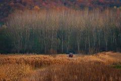 De herfstgebieden in Roemenië royalty-vrije stock fotografie