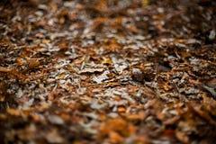 De herfstgebladerte Stock Foto's