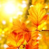 De herfstgebladerte Royalty-vrije Stock Afbeeldingen
