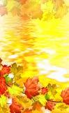 De herfstgebladerte Royalty-vrije Stock Foto's