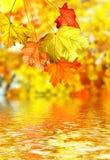 De herfstgebladerte Stock Afbeeldingen
