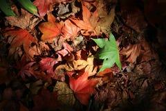 De herfstgebladerte Stock Foto