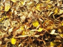 De herfstgebladerte Stock Afbeelding