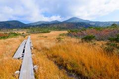 De herfstgebladerte in Aomori, Japan stock fotografie