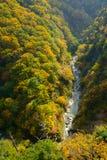 De herfstgebladerte in Aomori, Japan royalty-vrije stock fotografie