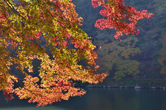 De herfstgebladerte, Arashiyama Kyoto Japan Royalty-vrije Stock Foto